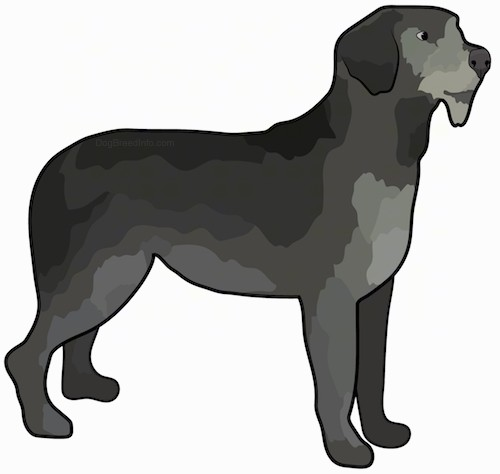 A drawing of the side view of a large breed dog with various shades of gray and black with ears that hang down to the sides, a gray nose, a beard under its chin and a long tail that is being held low standing up.