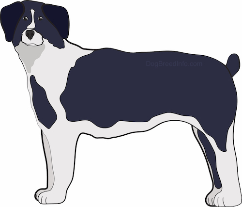 Side view of a drawing of a black and gray large breed thick coated dog with a nub for a tail, small ears that fold over to the sides, a black nose and gray paws.