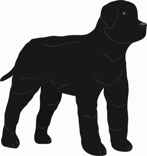 A drawing of a large, thick coated, black dog standing looking to the right. The dog has small ears that hang down to the sides and a long black tail.