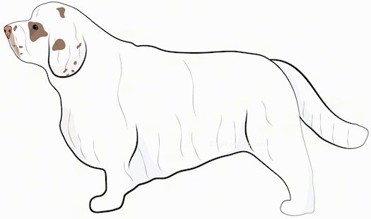 Side view drawing of a long, low to the ground, short legged white dog with tan spots on its face and a long coat and long tail.