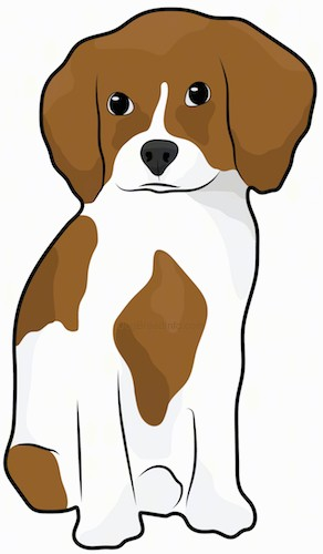 Front view drawing of a brown and white puppy with dark eyes and a dark nose sitting down.