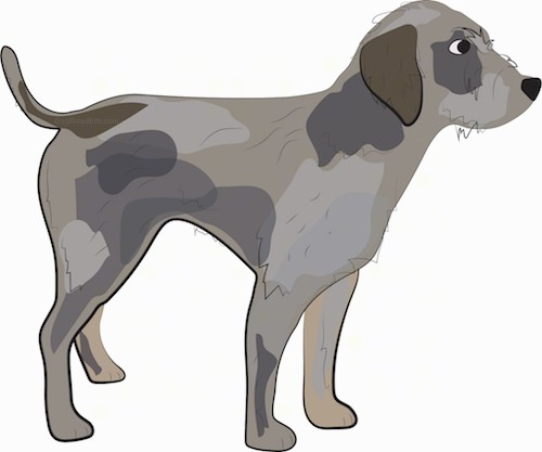 A drawing of a wiry looking tan, gray and brown dog with a long tail, a black nose and dark eyes standing sideways.