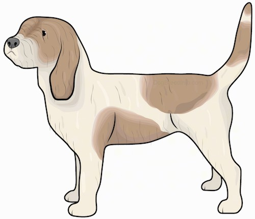 Side view drawing of a shaggy tan and brown patched dog with a long tail, a boxy snout and long ears that hang down to the sides standing up.
