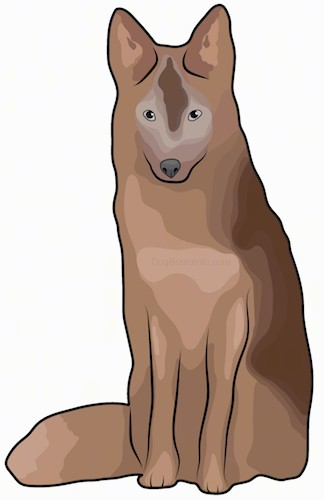 Front view drawing of a wolf looking brown dog with perk ears and a thick coat with a bushy tail, and gray eyes and a black nose sitting down.