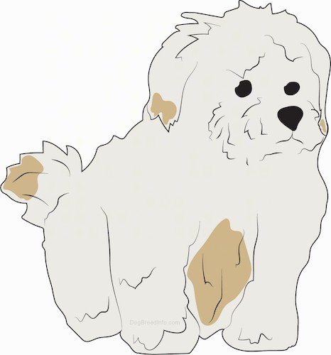 A drawing of a small, thick-coated, fluffy tan dog with darker spots of brown with black eyes and a black nose.
