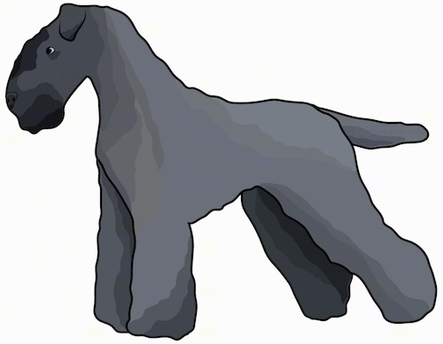 Side view drawing of a blue-black colored dog with a thick soft coat and a square muzzle with small fold over ears standing up.