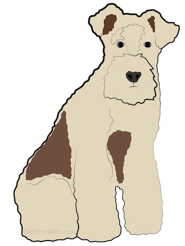Front side view - drawing of a tan with brown spotted dog with a thick coat, a thick hairy square muzzle and small ears that fold over at the tips sitting down.