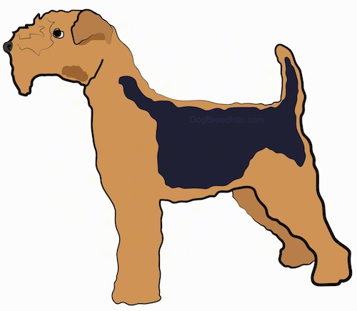 Side view - drawing of a brown with a black saddle dog with a thick coat, a thick hairy square muzzle and small ears that fold over at the tips, a black nose and black eyes standing in a stack pose.