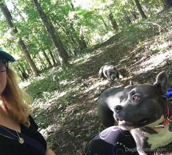 A girl taking a selfie in the woods with two gray dogs. One dog is right next to her and the other dog is laying down in the distance.