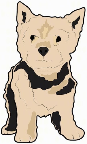 A drawing of the front view of a standing small, thick coated, tan and black dog with small perk ears, a black nose and dark eyes.