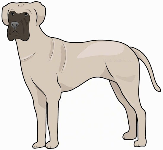 Side view drawing of a tall, muscular dog with extra skin, a square muzzle, ears that hang down to the sides a dark nose, dark eyes and a long tail standing.