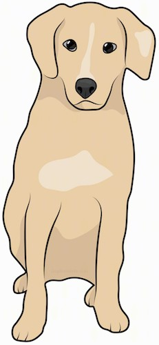 Front view drawing of a tan dog with ears that fold down to the sides, dark eyes and a black nose sitting down.