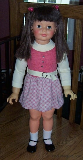 Front view of a real looking little girl doll with long dark brown hair with bangs with pink ball hair clip bands on each side of her head, blue eyes, pink cheeks and pink lips. She is wearing a white and pink dress with a white belt, white socks and shiny black shoes. She is standing on a wooden floor in front of a wooden railing.