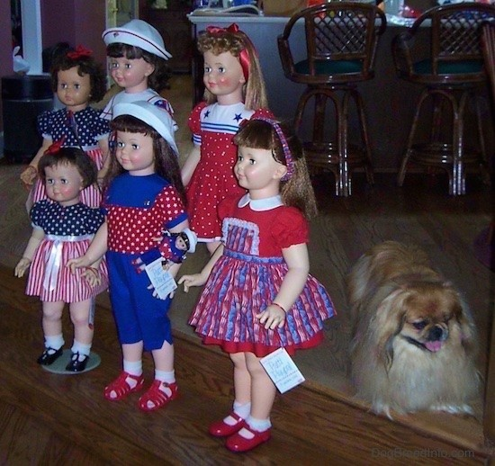 Side view - Six realistic looking large dolls dressed in red, white and blue standing on wooden steps in a kitchen. Three dolls have red shoes, two have black shoes and one has on white shoes. Two of the dolls are wearing sailor hats. There is a Pekingese dog behind them.