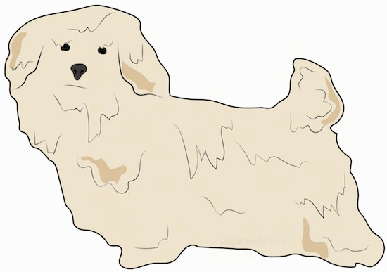 A drawing of a thick coated tan dog standing up. The dog has a small tail that is up in the air with ears that hang down to the sides, a black nose and black eyes.