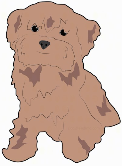 A drawing of a fluffy brown dog with hair hanging down over it's eyes, small ears that hang down to the sides, a black nose and dark eyes sitting down.