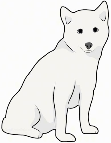 Front side view drawing of a thick coated white dog with small perk ears, a black nose and dark eyes.