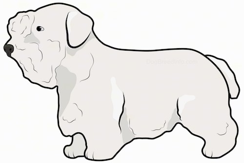 Side view of a drawing of a small dog with short legs, a thick coat, small hanging ears, a black nose and a long body.