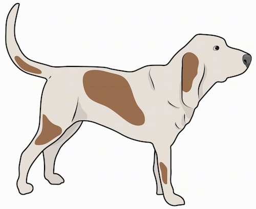 Southern Hound Dog Breed Information