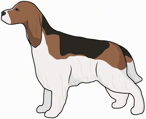 Side view drawing of a tricolor brown, black and white hound looking dog with long ears that hang down to the sides and a thick longer coat and a long tail standing up and facing to the left.