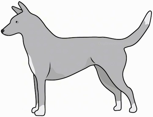 Side view drawing of a gray with white shorthaired dog with perk ears and a long tail and pointy snout standing up.