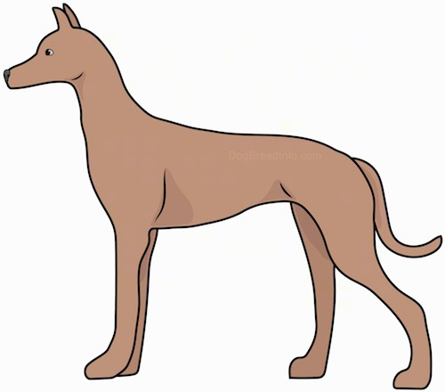 Side view drawing of a tall, skinny brown dog with a long tail, a long snout and small perk ears standing.