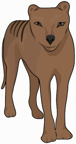 Front view of a large brown dog that looks like a tiger with stripes and small rounded ears