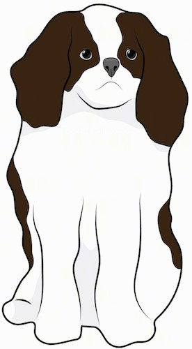 Front view drawing of a small, dark brown and white thick coated dog with long soft ears, a dark nose and dark eyes sitting down.