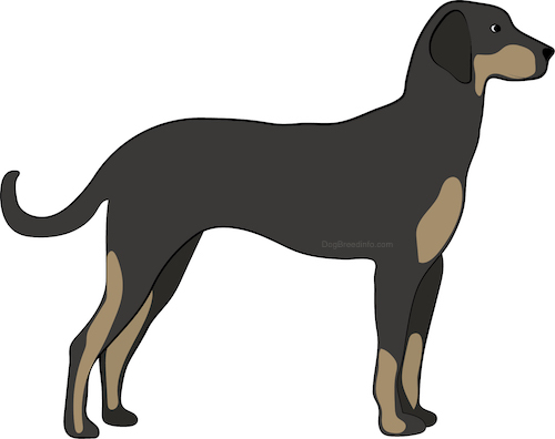 Side view drawing of a brown with tan hound dog with ears that hang down to the sides, long legs and a long tail with a long muzzle and a black nose standing up.