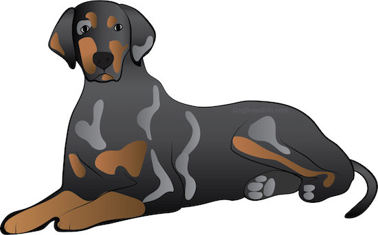 Front side view drawing of a brown with gray and tan hound dog with ears that hang down to the sides, a long tail with a long muzzle and a black nose laying down.