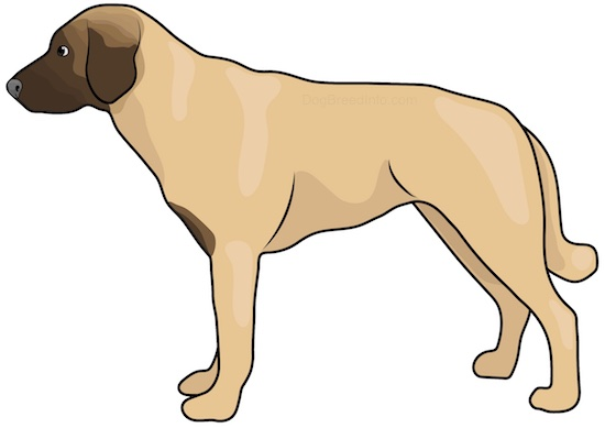 A side view drawing of a yellowish-tan dog with a darker brown muzzle, a long thick tail dark eyes and a black nose standing.