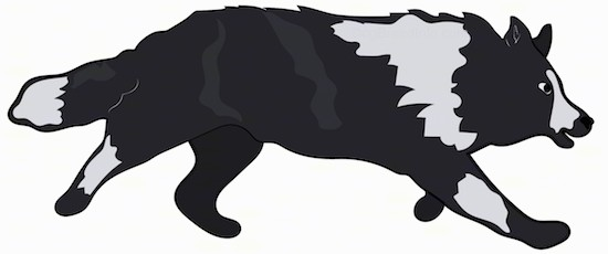 Action shot - a drawing of a running black and gray dog with a thick coat, small perk ears and along thick coated tail.
