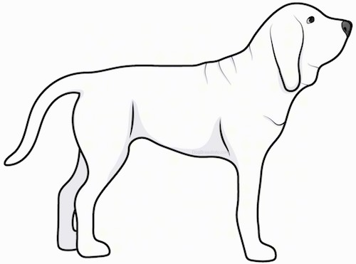 Side view drawing of a large breed white dog with a long tail and a lot of extra skin and wrinkes standing up.