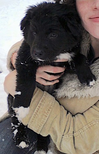 A little fluffy black puppy with white on his chest and tips of his paws being held by a lady in a tan jacket and blue jeans outside in the snow