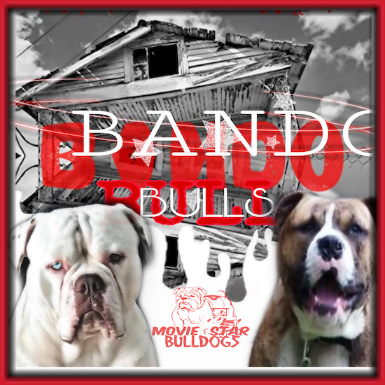 The roof of an old house above the words Bando Bull written in both red and white letters with a white dog with a blue eye on the bottom left and a brown brindle dog on the bottom right with a logo that says Movie Star Bulldogs in-between