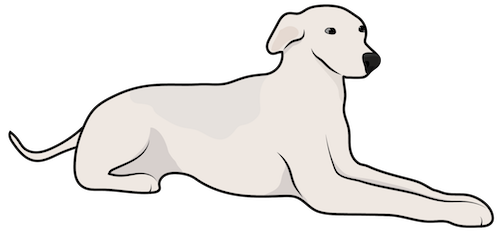 A short coated solid tan dog with long legs, small fold over ears and a long tail laying down
