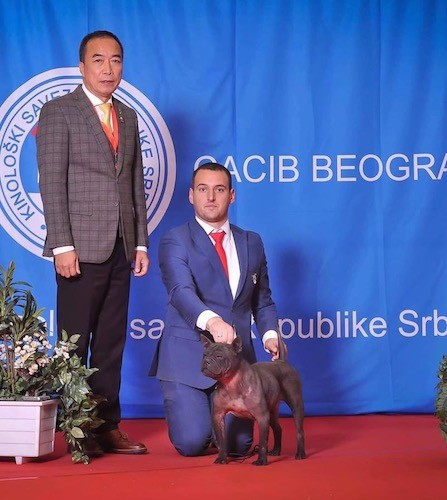 Two men, one standing and one kneeling next to a medium-sized, thick bodied, muscular dog in front of a blue back drop on a red floor at a dog show