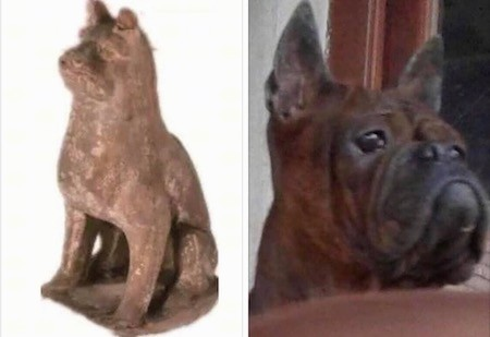 On the left is a carved ancient artifact and on the right is a head shot of a Chongqing dog from today