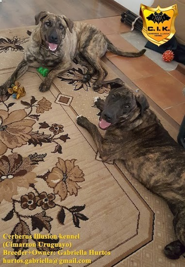 Two large brindle dogs with smiles on their faces laying down in a living room with toys around them