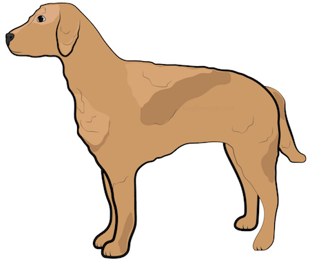Side view of a brown dog with a wavy coat and drop ears standing