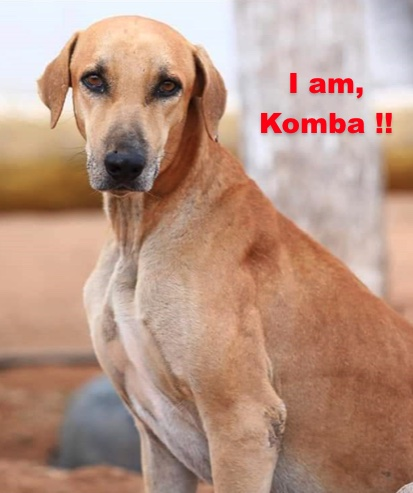 A large breed tan dog with ears that hang to the sides with a black nose and dark eyes sitting down with the words overlayed in red letters 'I am Komba !!'