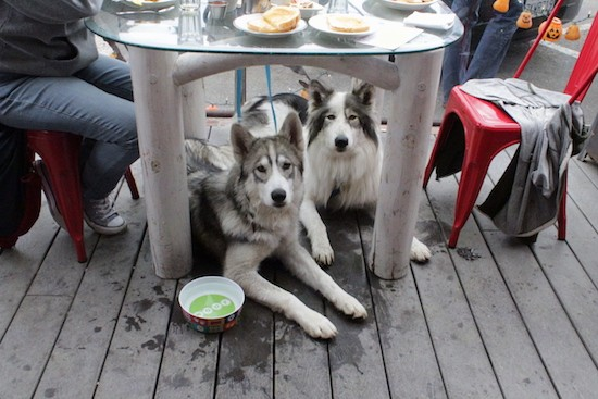 Two large breed dogs under a table outside on a deck while people eat lunch at the table sitting in red chairs