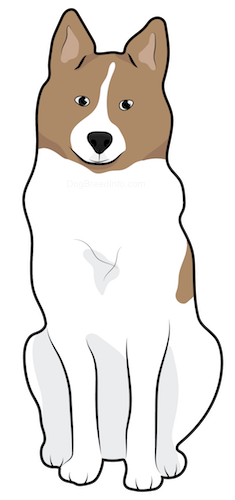 A drawing of a thick coated, brown and white dog with perk ears and a black nose sitting down