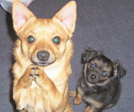 Mix Breed Dog Information