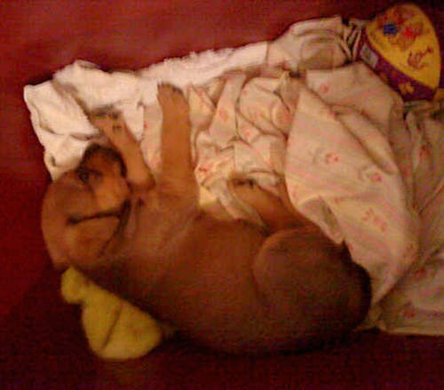 A little brown puppy laying down sleeping on a pile of sheets on the floor next to a yellow and purple basketball