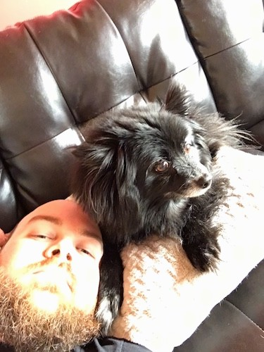 A thick coated long haired black dog with perk ears laying next to a man's head who is laying on a brown leather couch
