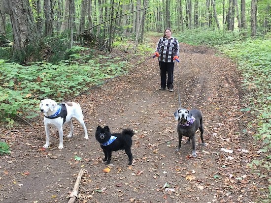 A woman standing on a wide trail in the woods holding two leashes for two large breed dogs with a little black dog off leash in the middle of them