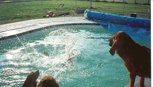 Rocketman splashes into a pool as Radar and Cash are watching