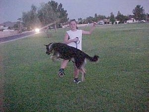 Buck the Shepherd/Husky/Rottie mix is jumping over its owners leg