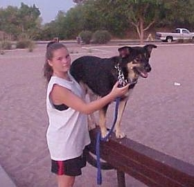 Buck the Shepherd, Husky, Rottie mix standing up on a beam next to his owner at a playground.
